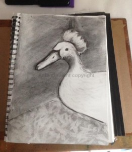 Amanda Hunt duck2